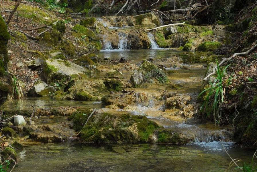 Tra boschi e torrenti, ultimi due appuntamenti estivi col Museo del Fiore