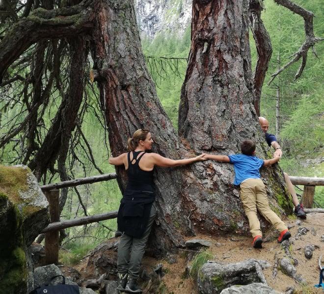 L'abbraccio degli alberi simultaneo più grande delle Alpi