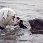 Tenero bacio tra una foca e un cane: bellissima connessione tra due magnifiche creature
