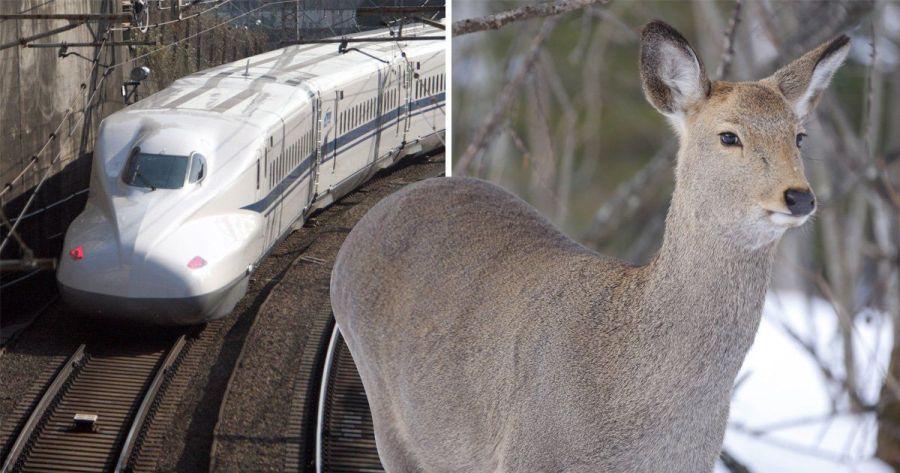 In Giappone i treni potranno abbaiare