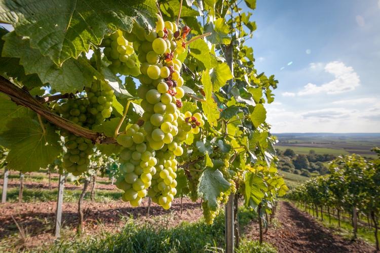 Agricoltura, deroghe e agevolazioni per sostenere le produzioni in emergenza Covid-19