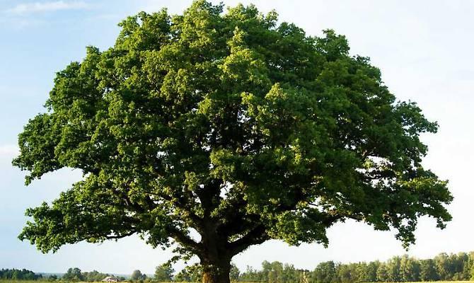 Il Comune di Narni pianta 900 nuovi alberi fra il Centro Storico e lo Scalo