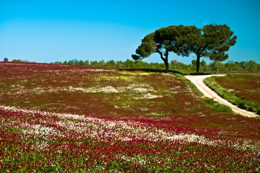 Wwf Umbria contro la monocoltura intensiva dei noccioleti nell'Alfina