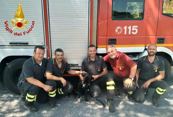 I Vigili del Fuoco recuperano un cucciolo di 6 mesi nei pressi dell'A1