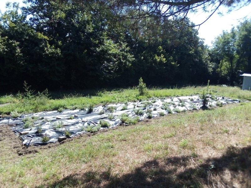 Anche l'ITT Chimico ha il suo piccolo orto botanico di Santolina etrusca