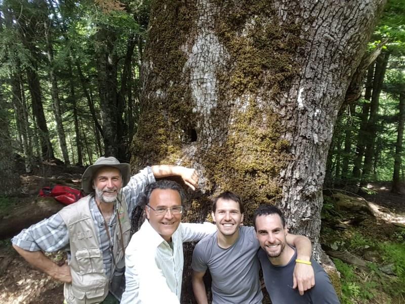Nel Parco dell'Aspromonte vivono alcune delle querce più vecchie del pianeta