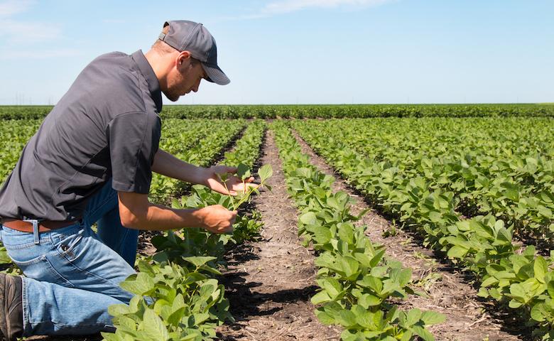 """Agricoltura, De Luca (M5S): """"In Umbria criticità su attuazione del piano si sviluppo rurale"""""""