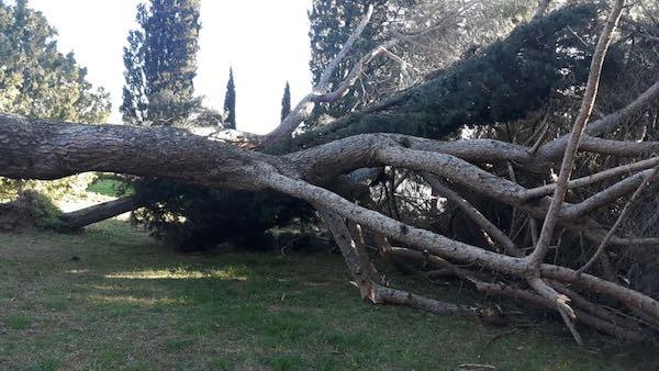 Maltempo, alberi e rami spezzati sulle carreggiate. Senza sosta il lavoro dei Vvff