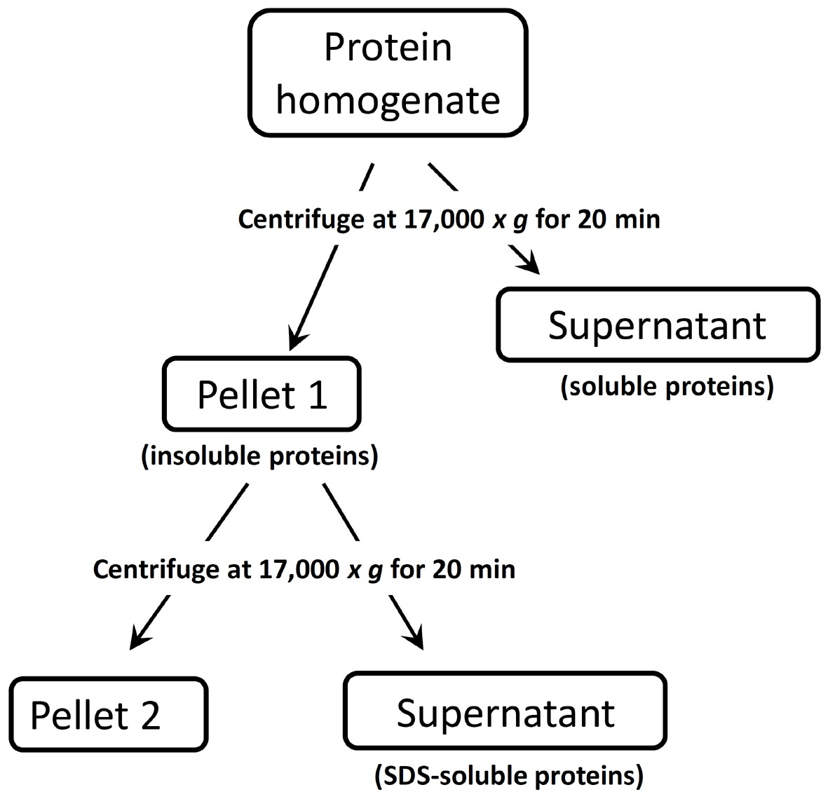 Extraction Of Soluble And Insoluble Protein Fractions From