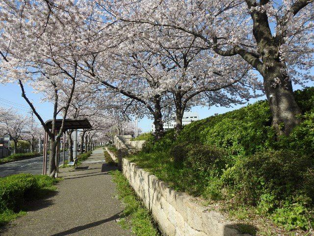 EBUNO泉之森禮堂的櫻花