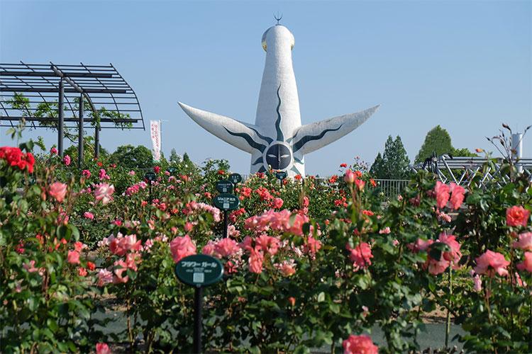 大阪で多種多様のバラを楽しめるおすすめス