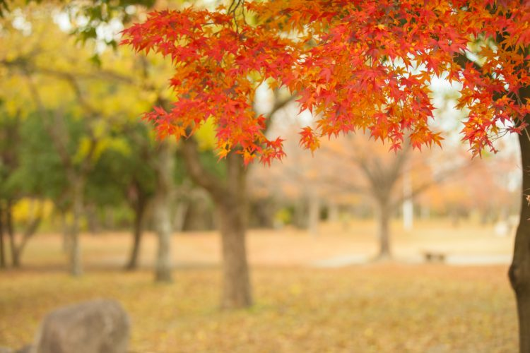 大阪の紅葉 2018!人気のおすすめ絶景
