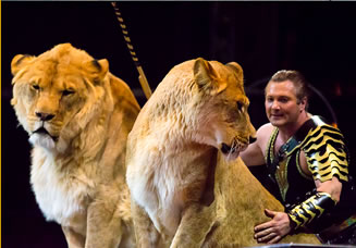Mr.Michael和狮子的照片