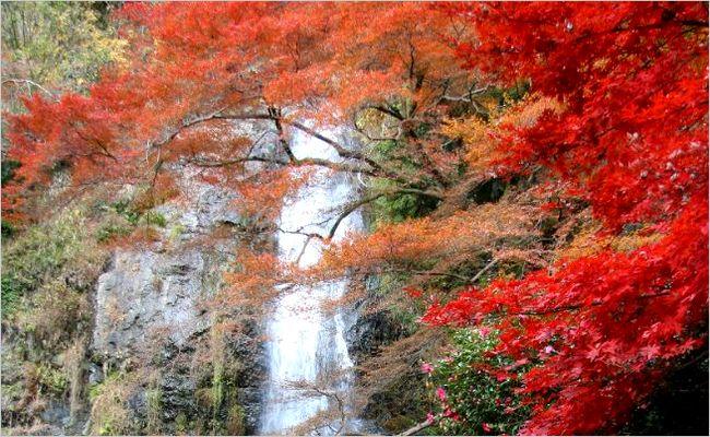 推荐大阪的四个瀑布!感受自然重新焕发好心