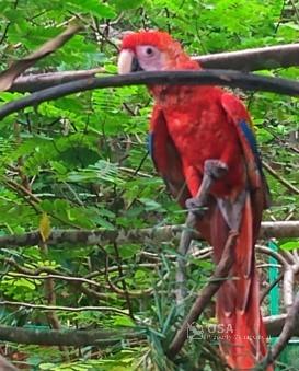 macaw alturas wildlife sanctuary