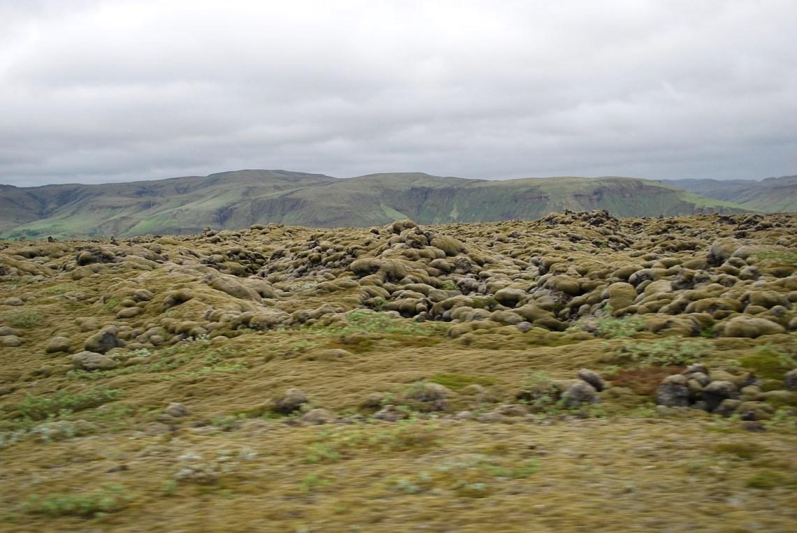 The moss fields..