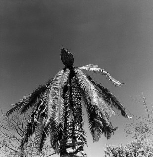 graciela_iturbide_11_Oaxaca_Mexico_1998