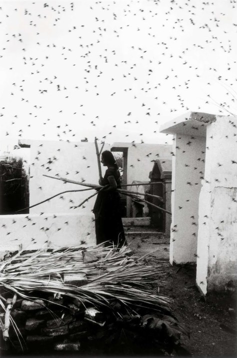 Graciela Iturbide. Cementerio. (Juchitán, 1979)
