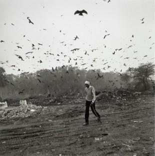 "Graciela Iturbide, de la serie ""Pájaros"""