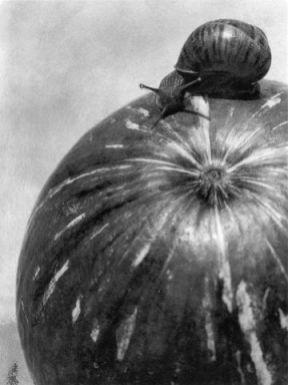 Calabaza y caracol. 1928