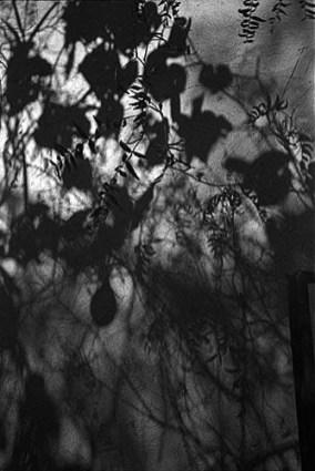 De la serie Jardín Interior. 1995