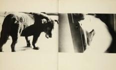 A hunter, Daido Moriyama_318