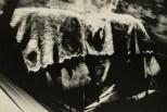Daido Moriyama, light and shadow_64