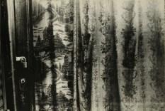 Daido Moriyama, light and shadow_80