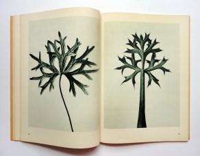 Urformen der Kunst karl blossfeldt 1
