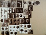 working_collage_karl_blossfeldt_4
