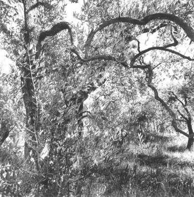 Friedlander_Apples-and-Olives-11-562x570