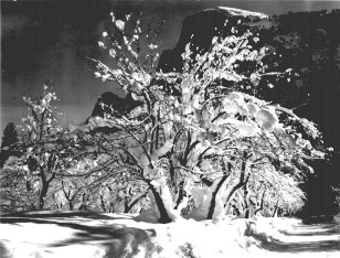 Ansel_Adams-Half_Dome,_Apple_Orchard,_Yosemite
