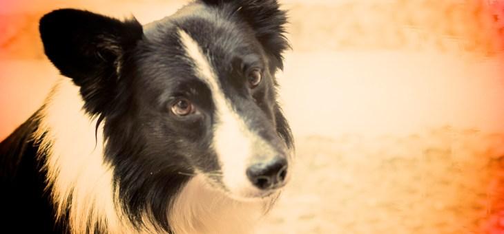 5 Nombres que no deberías ponerle jamás a tu perro