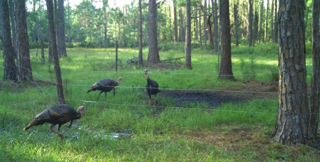 Turkey Hunt - osceolaturkeyhunts.com
