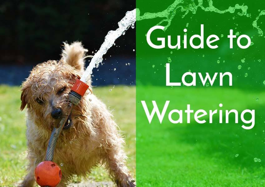 a guide to lawn watering