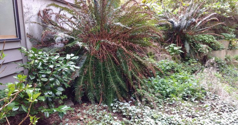 North Side Fern Discovery