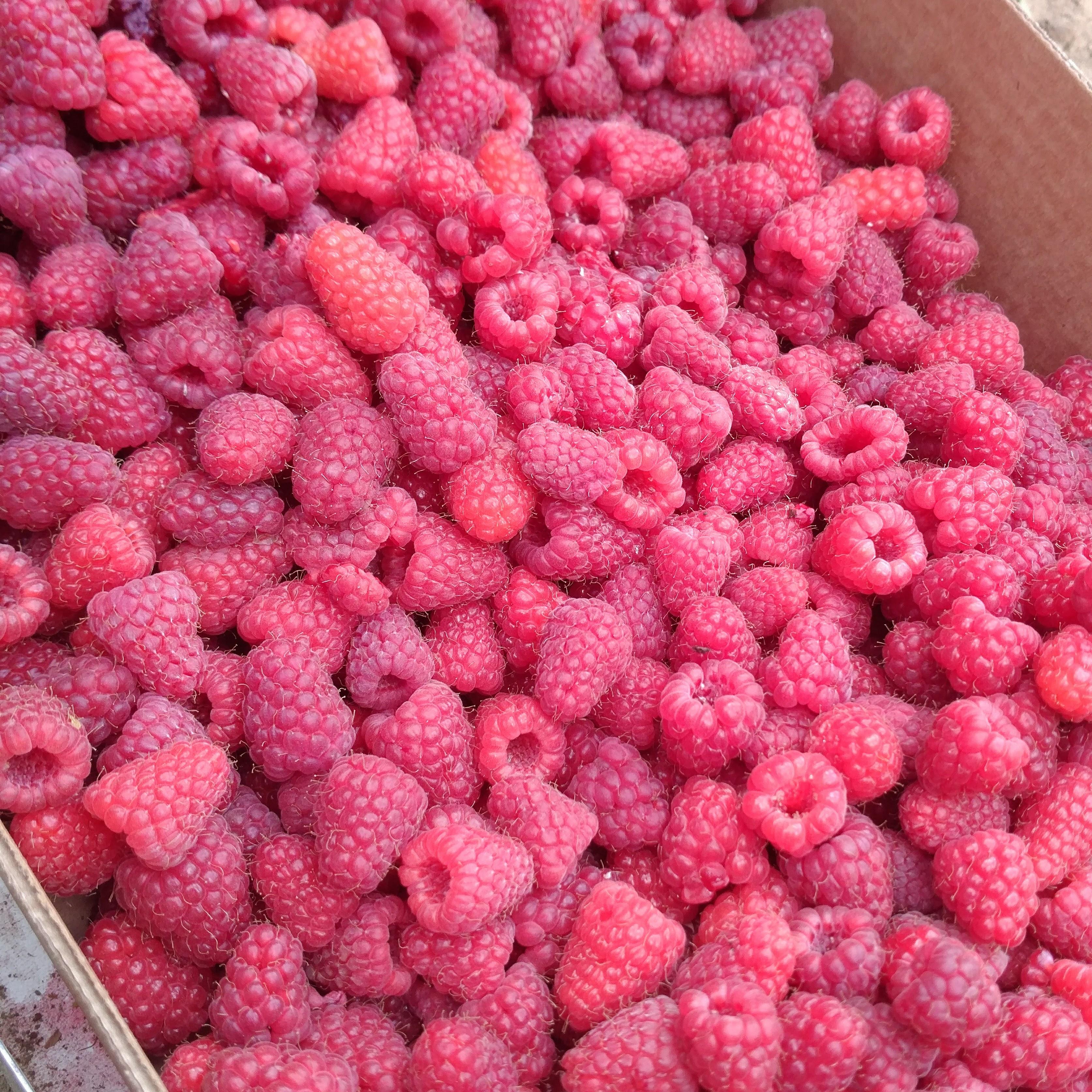 Raspberry Picking 2017