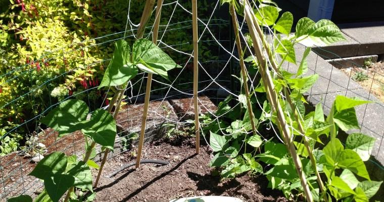 Garden Update July 28, 2017