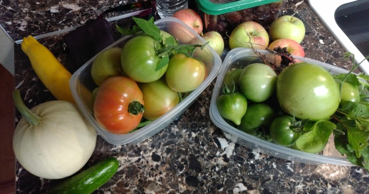 A New Beginning in Budgeting Part 2: Adjusting our Grocery Spending