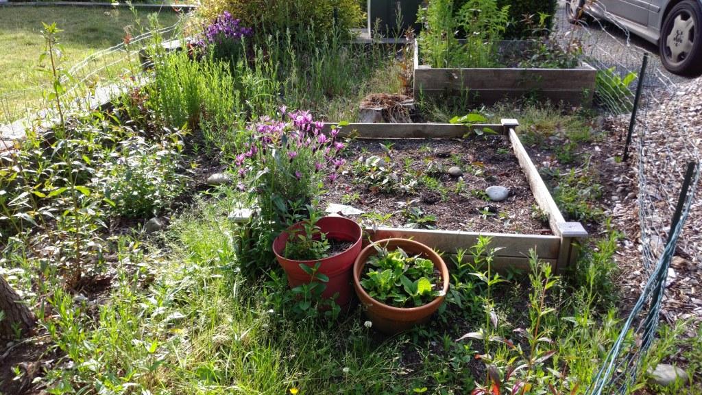 Weedy garden.