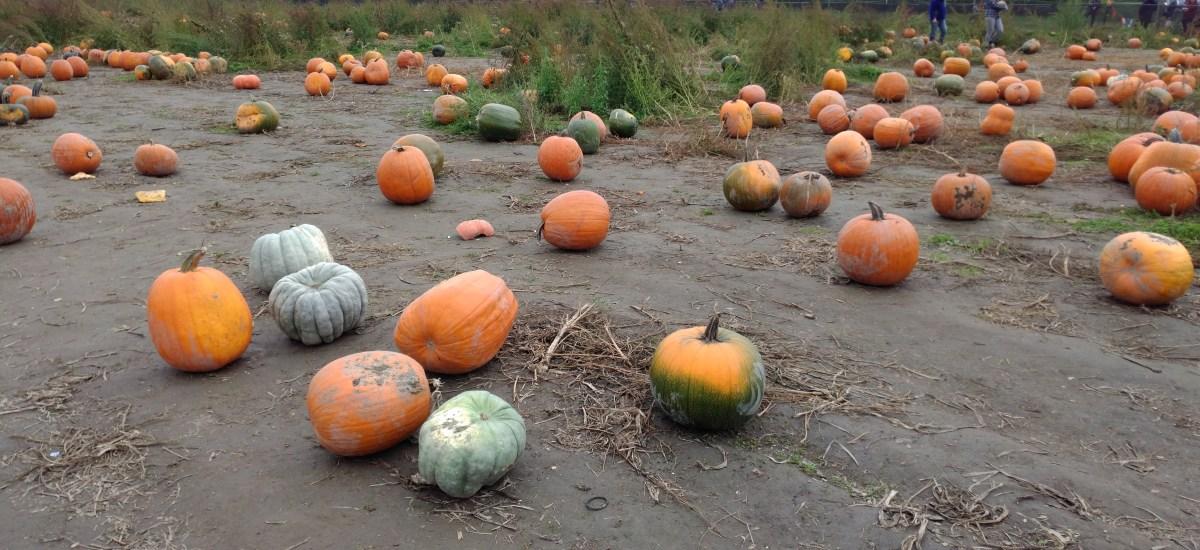 Pumpkin Farms and Pumpkin Carving!