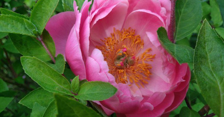 Garden Update 06.08.19