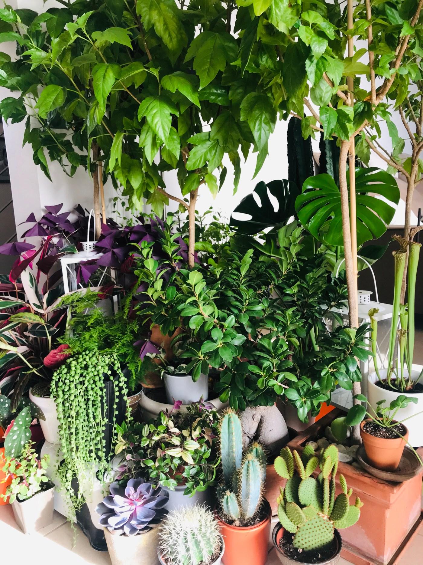 Plante Exterieur Toute Saison Pas Cher comment se créer une jungle urbaine pour 0€ ? – osez planter