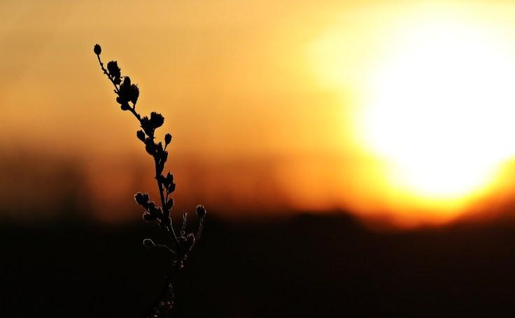 sunset-2021238_1920