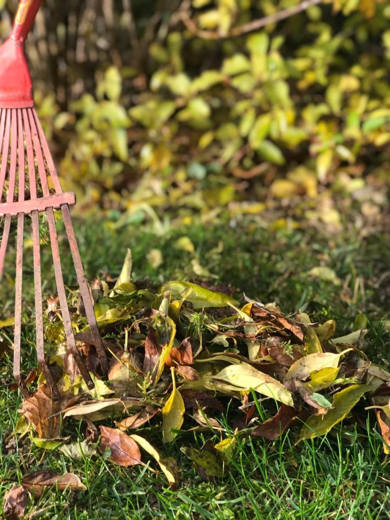 5 étapes au jardin pour passer l'hiver