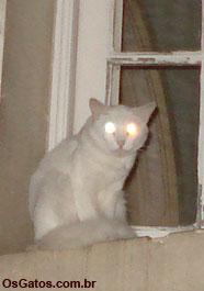 características dos gatos: visão
