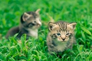 Fofuras - Fotos de gatos