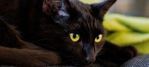 Gatos pretos são o máximo
