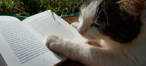 Os gatos na literatura