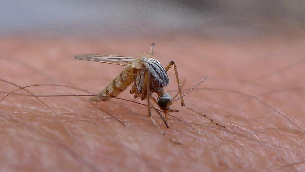 Mosquitoes infected with West Nile virus have been found in Oshawa.